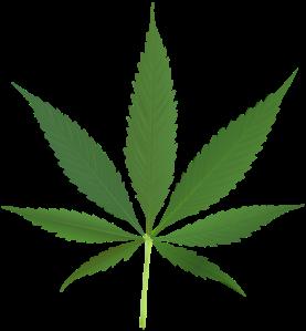 444px-Cannabis_leaf_2.svg