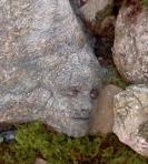 Peeta rock